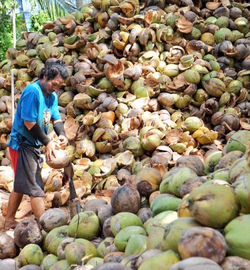 Farmer 2 coconut pt sas