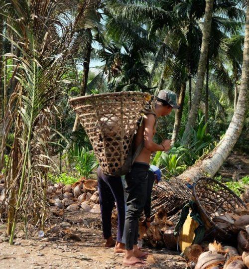 COCONUT INDONESIA PT SAS